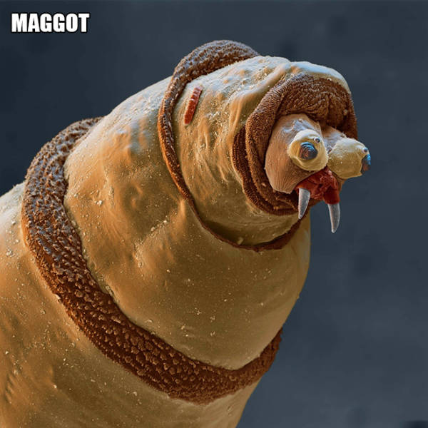 Not Every Creature Should Be Placed Under The Microscope…