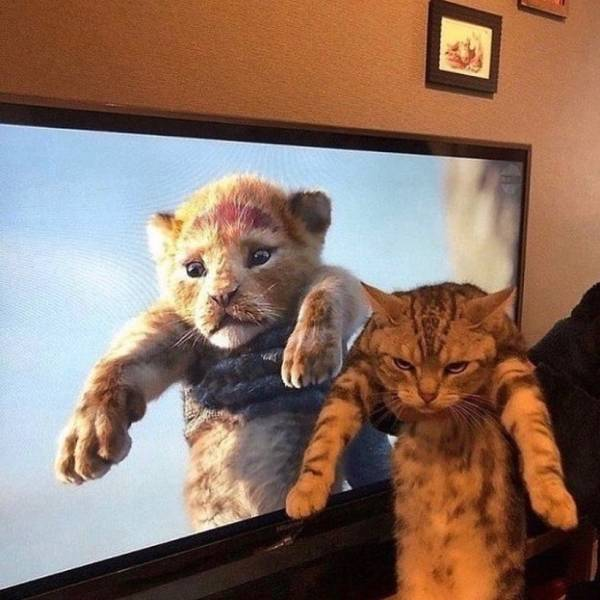 These Animals Can't Be Serious About Being Angry…