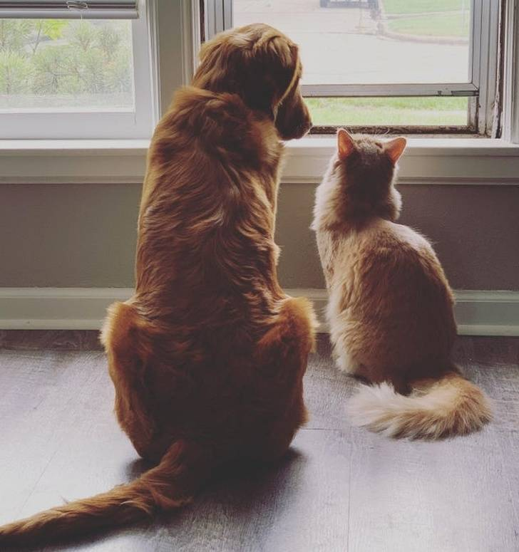 Who Said Cats And Dogs Are Enemies?
