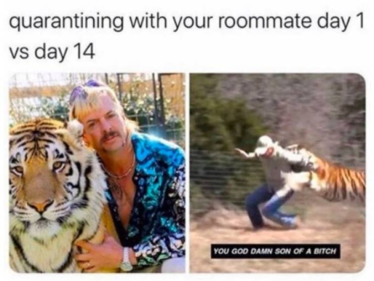 """""""Tiger King"""" Inspired Lots And Lots Of Memes…"""