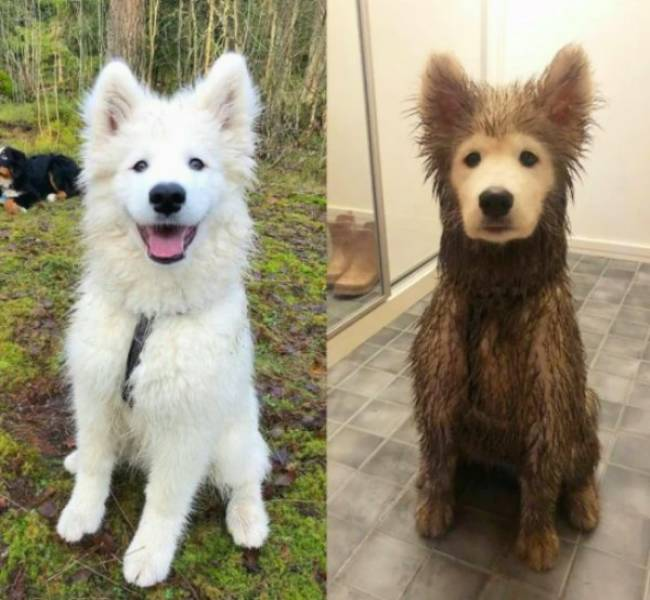 Before-And-Afters Look Great!