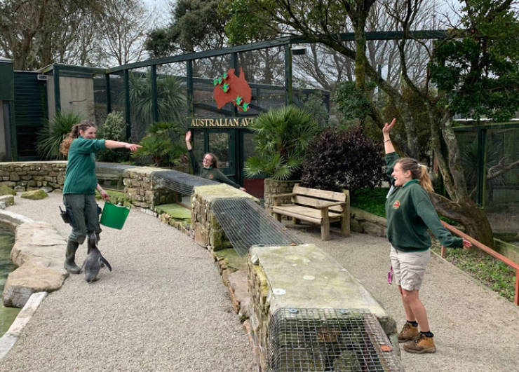 English Zookeepers Decided To Self-Isolate… At Work!