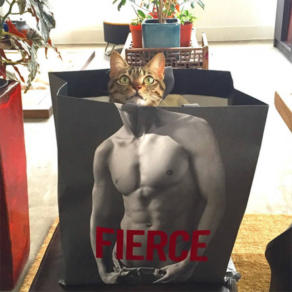These Cats Have Been Working Out!