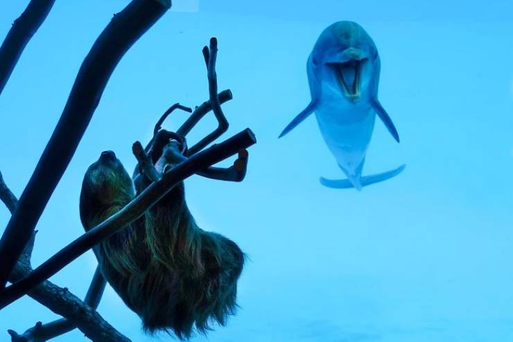 Who Knew Dolphins Liked Sloths So Much…