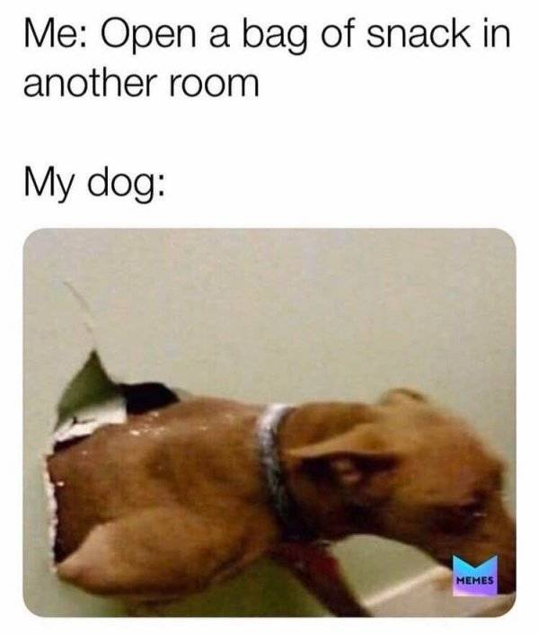 Memes For Those Who Love Dogs
