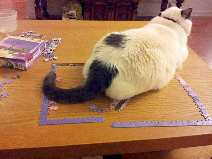 Cats Are Absolute Beasts At Puzzle Solving!