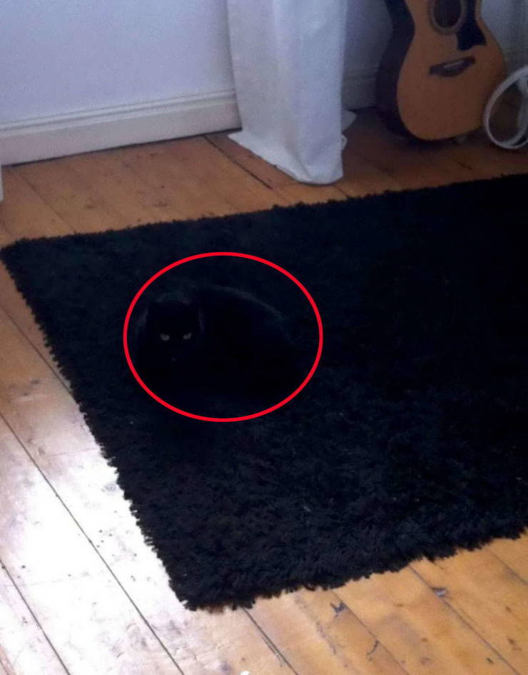 Find Those Cats!