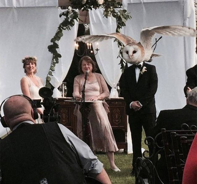 Weddings Never Go As Planned…