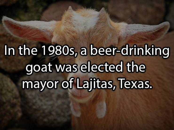 Let's Brew Up Some Beer Facts