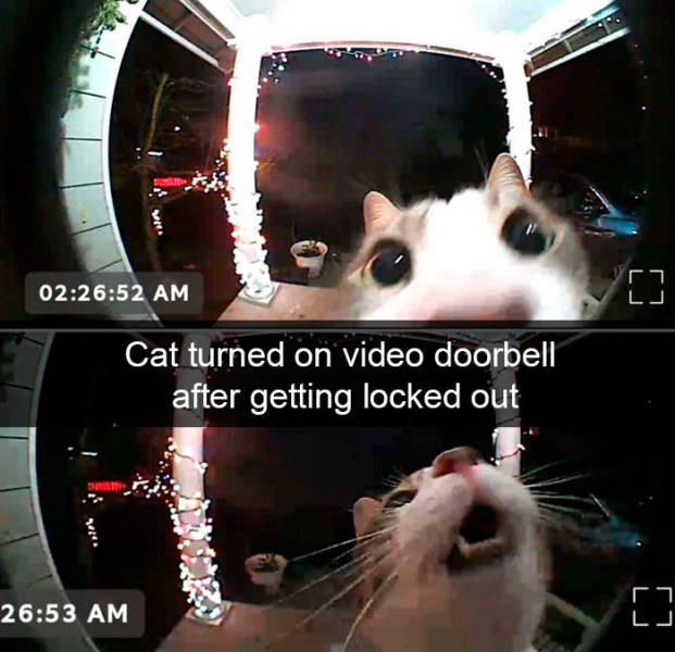 Time For Cat Snapchats!