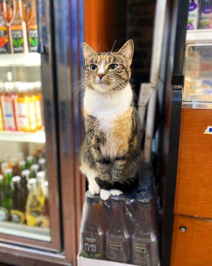 Cats Definitely Own These Shops...