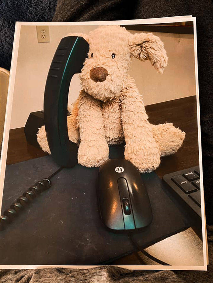 Toddler Girl Leaves Her Favorite Pet At The Hotel, Staff Takes It On An Adventure Before Sending It Back