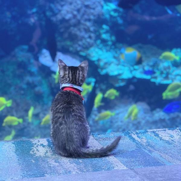 Kittens And Puppies On A Fantastic Aquarium Adventure