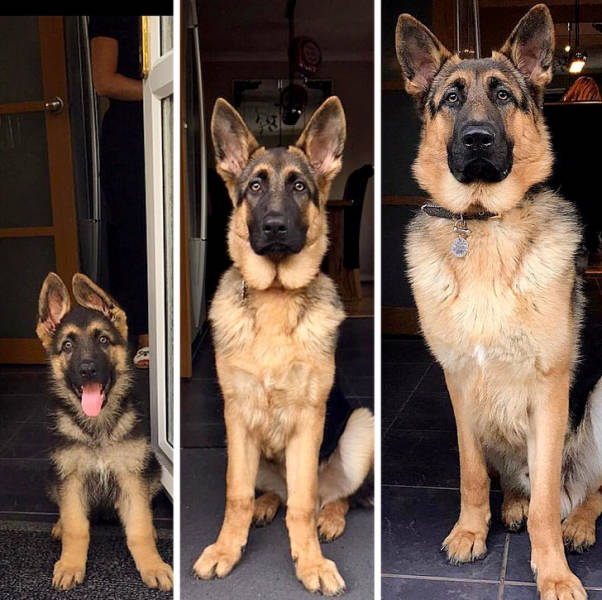 Our Pets Grow Up So Fast!