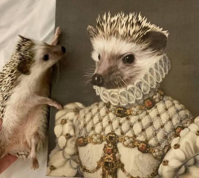 Crown & Paw Makes Pets Go Royal