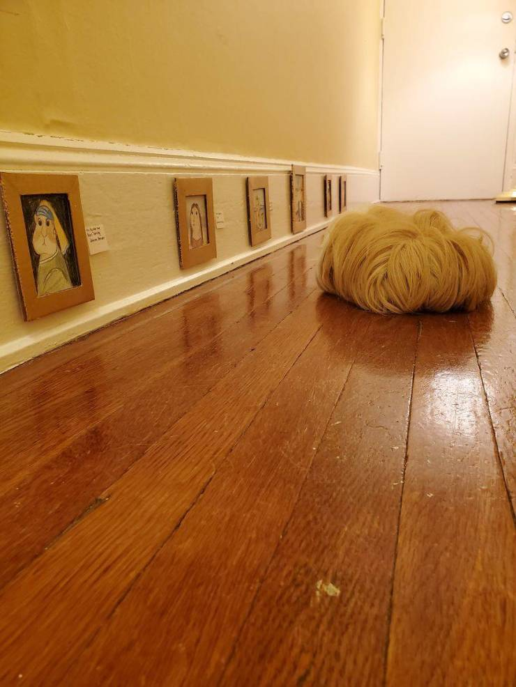 This Guinea Pig Has Its Own Fine Art Museum!