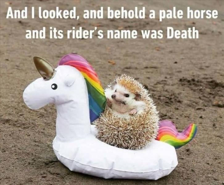 Animals Were Born To Make Us Laugh