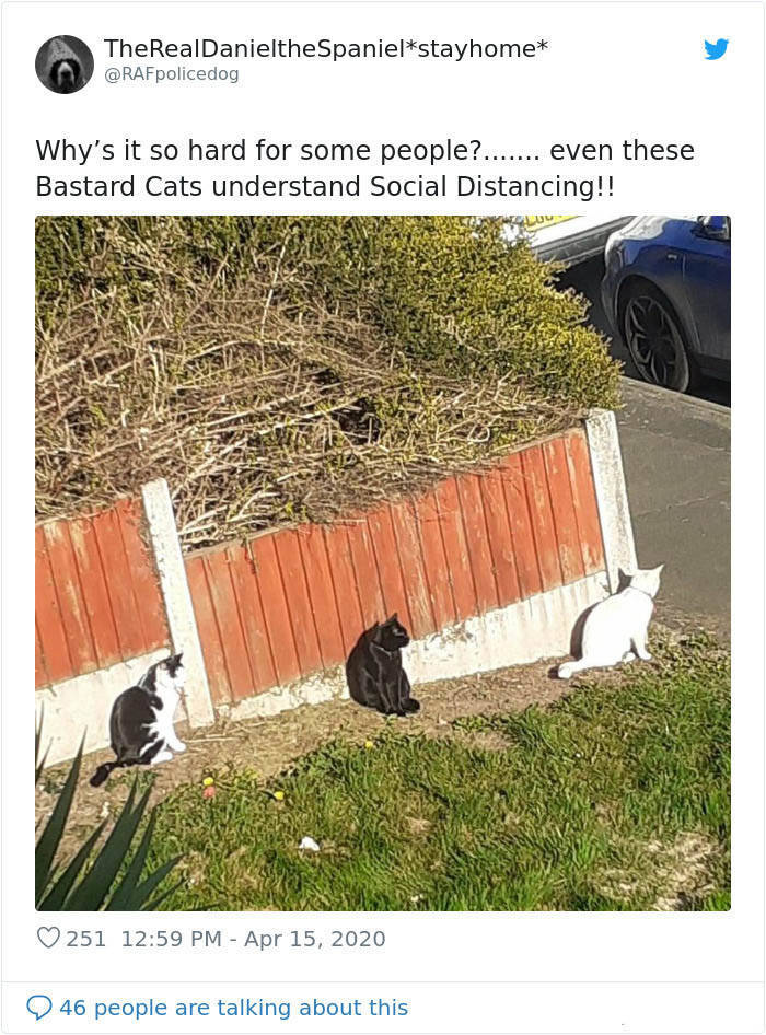 Even Animals Are Better At Social Distancing Than Humans!