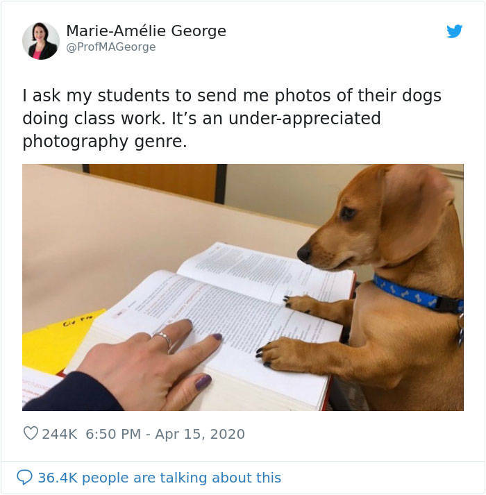 Pets Are Pretty Good At Doing Class Work!