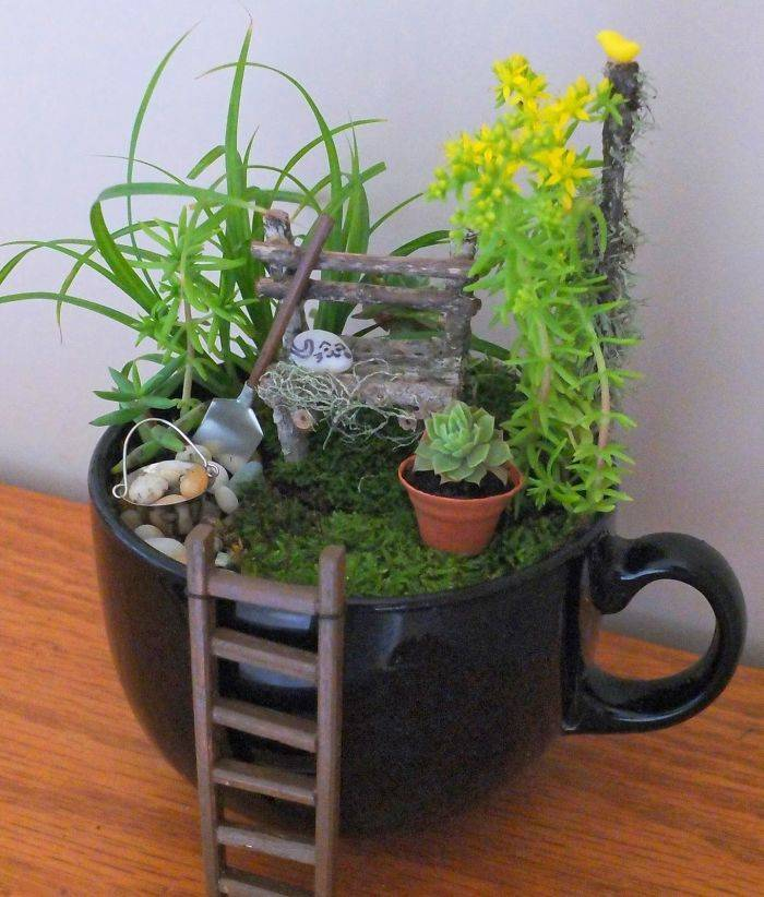 Quarantine Is The Perfect Time For Teacup Gardens!