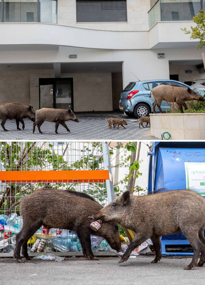 Animals Take Over The World During Quarantine
