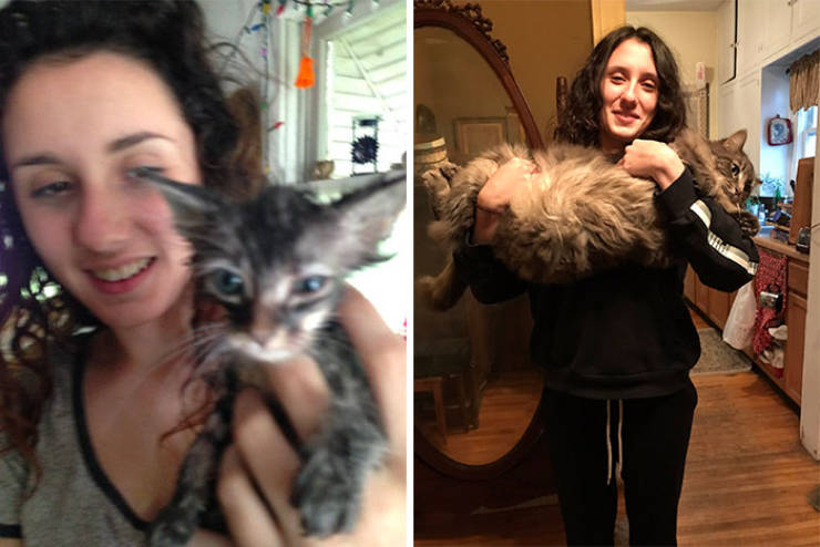 Cats Before And After Adoption