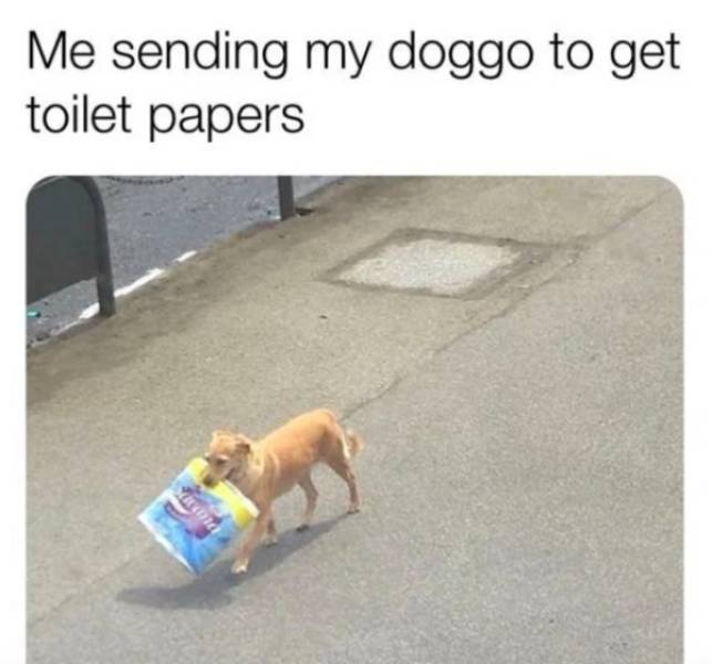 These Dog Memes Are Ruff
