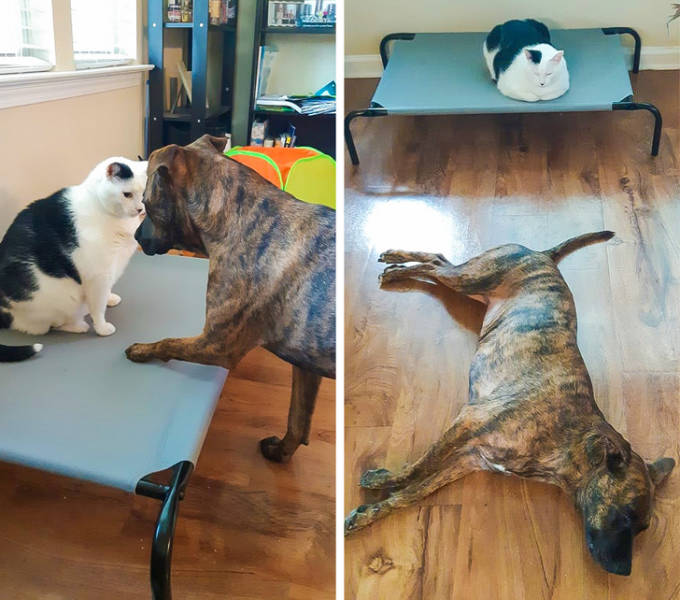 These Pets Don't Want To Be Good Anymore