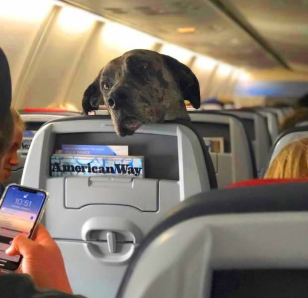 These Plane Neighbors Are Kinda Unexpected…