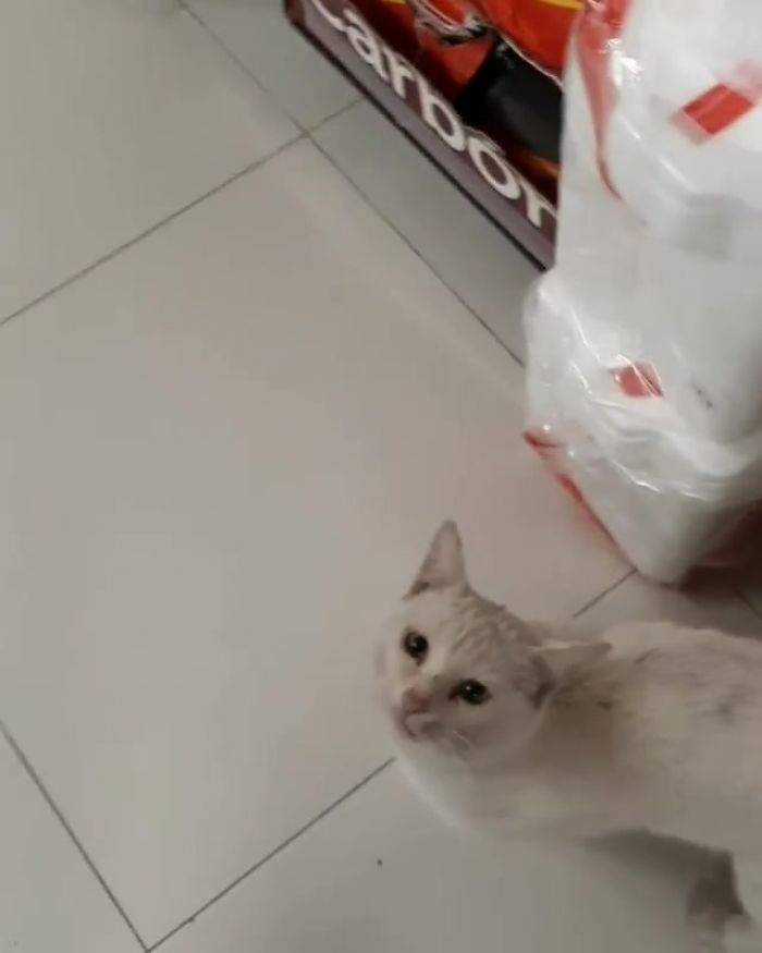 Stray Cat Asks For Food, Gets Adopted As A Bonus