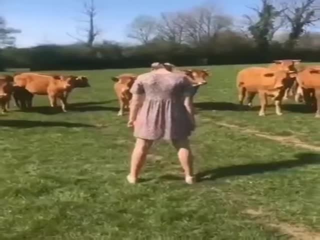 Animals Don't Like It