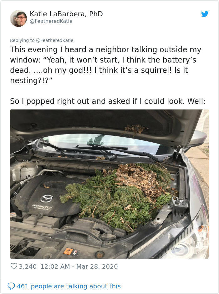 And That's Why You Should Always Look Under The Hood Of Your Car!