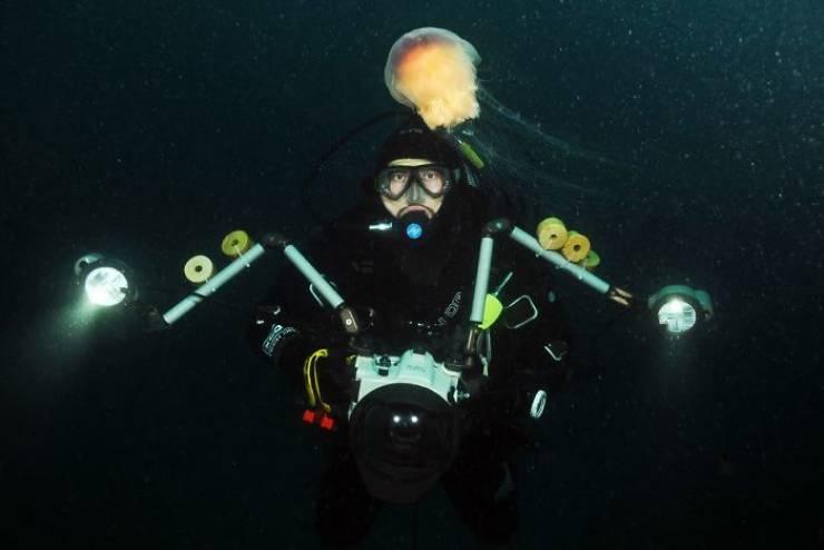 Meet Sea Angel With Zero CGI Whatsoever