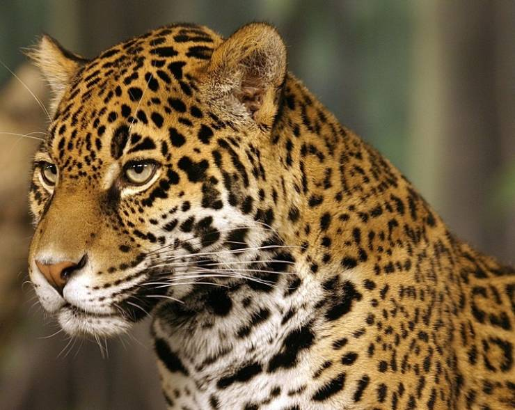 Internet Votes For The Most Beautiful Animals Of Our Planet