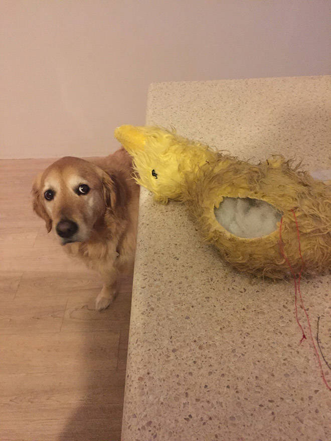 Pets Who Really Want Their Toys To Be Okay