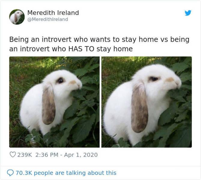 Women Meme All The Way Through Quarantine