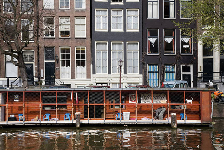 Have You Ever Heard About Amsterdam's Cat Boat?