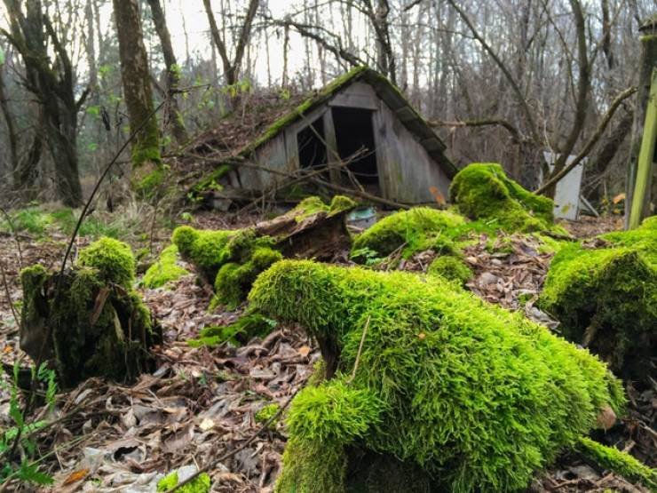 Nature Will Reclaim Everything Eventually