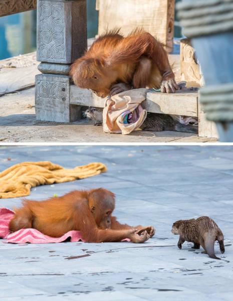 Animal Photos With Curious Backstories