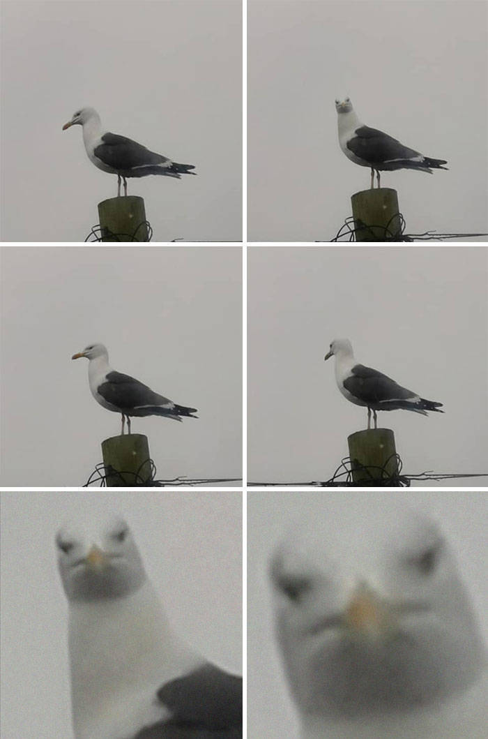 Not All Wildlife Photos Are Good…