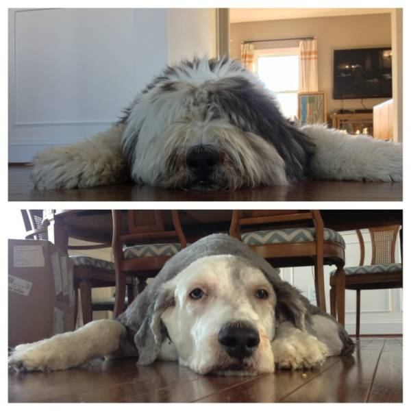 Pets Before And After