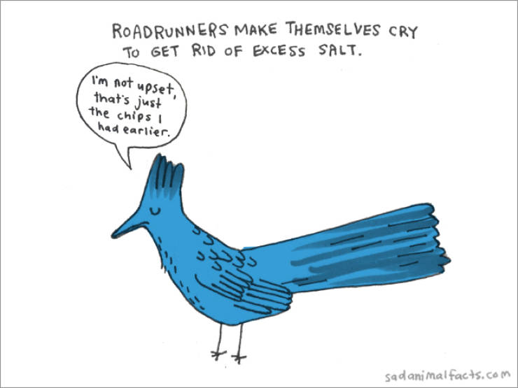Sad Animals With Sad Facts About Themselves