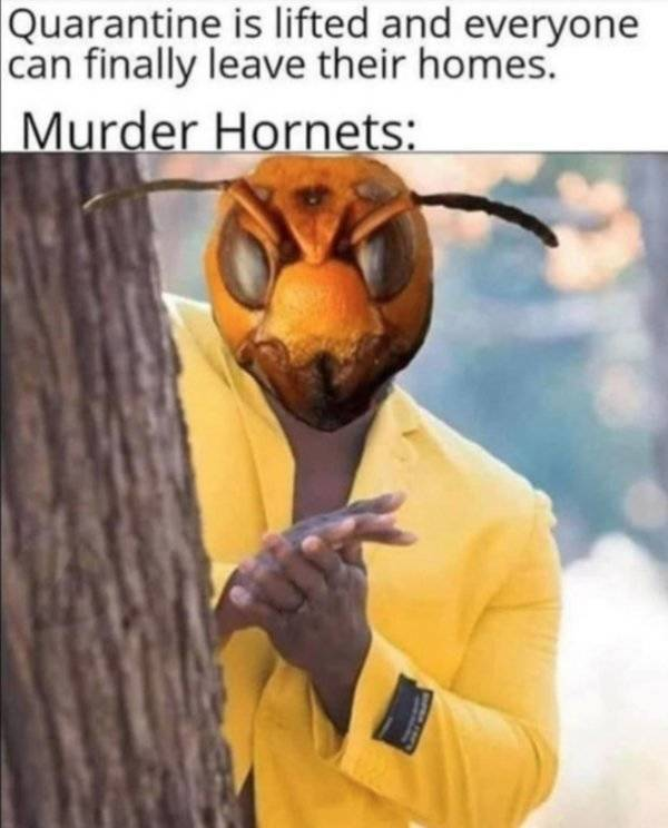 Murder Hornet Memes Are Coming For You!