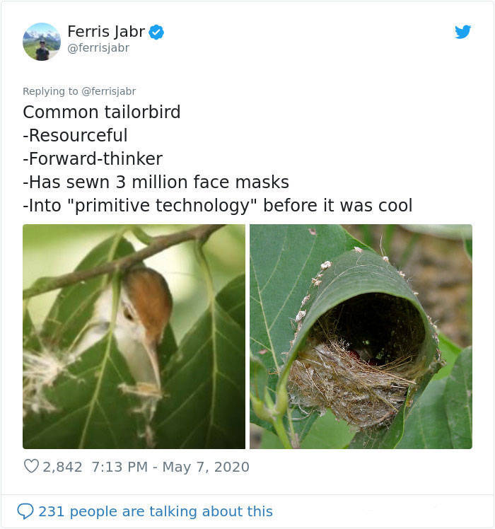 Get To Know About Different Bird Nesting Styles From This Science Writer!