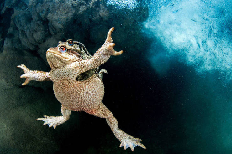 """Take A Look At Some Of The Best Photos From The """"2020 BigPicture Natural World Photography"""" Competition"""