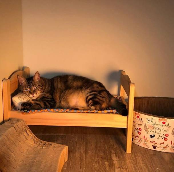 These IKEA Mini-Beds Are For Cats, Definitely!