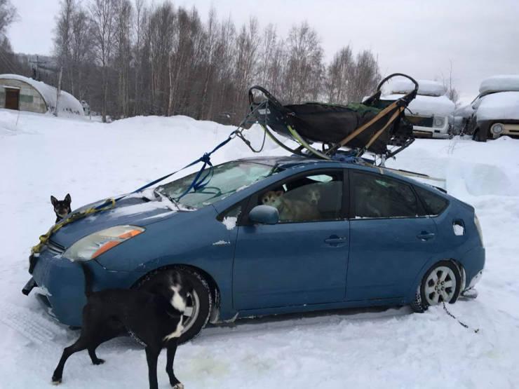 Cars Love Humor!