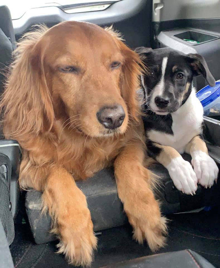 These Dogs Are Not Very Happy About Their New Siblings…