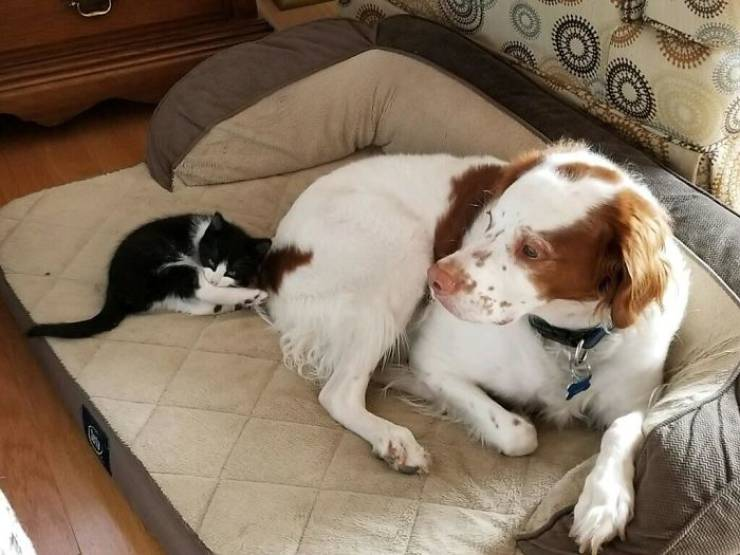 Cats Show Dogs Who's Boss