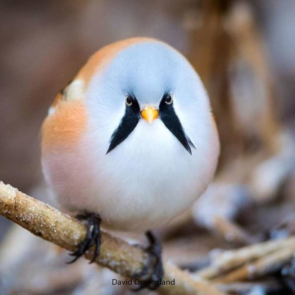 These Birds Are So Unique And So Beautiful!